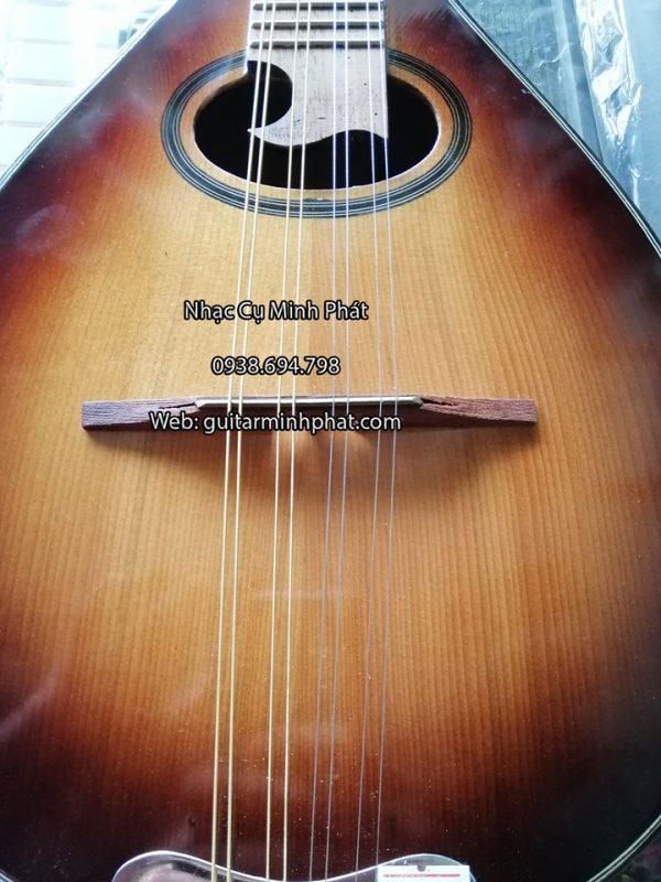 Ngựa đàn mandolin phải chắc chắn, không xê dịch.(hình ảnh thực tế của đàn Mandolin)